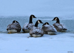 Winter Waterfowl viewing with North Shore Land Alliance
