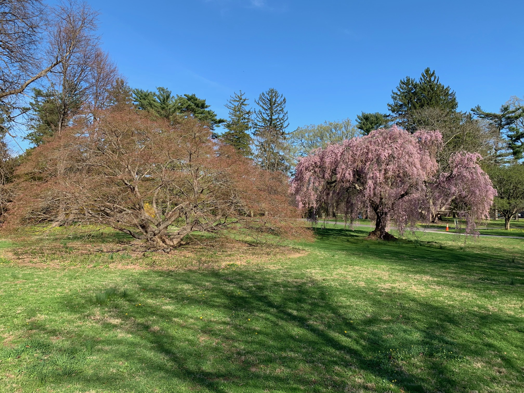 Enjoy the Wonders of Spring at Mill Pond, Wantagh